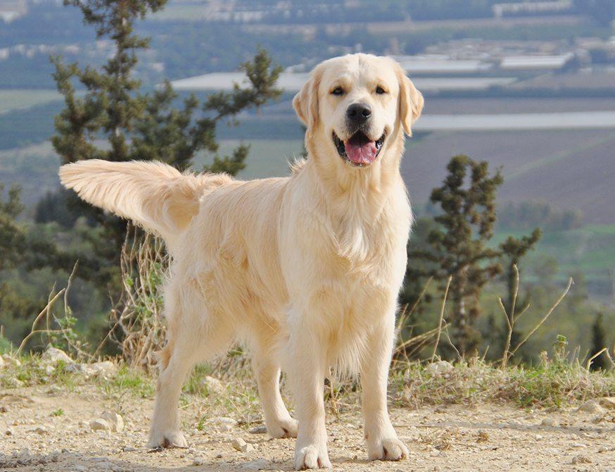 הגדול מרכז אילוף כלבים וחינוך גורים | קייטנות כלבים | מאלף כלבים EL-08