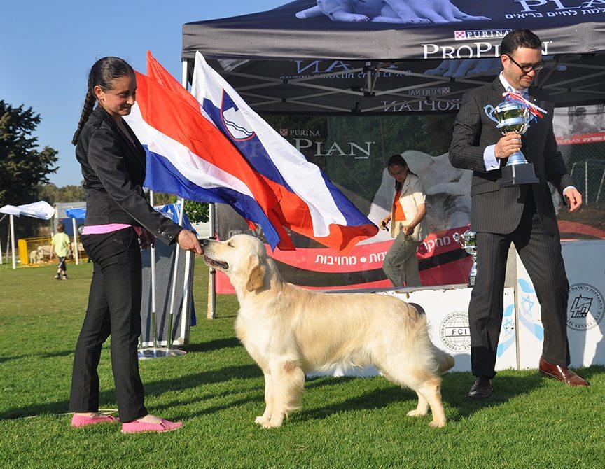 רק החוצה מרכז אילוף כלבים וחינוך גורים | קייטנות כלבים | מאלף כלבים LY-07