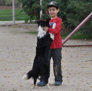 קייטנת כלבים