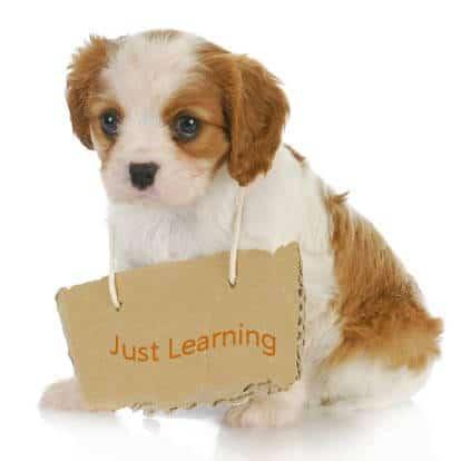 ההבדל בין אילוף כלבים לחינוך כלבים