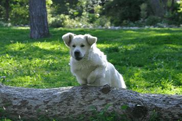 פעילויות עם כלבים