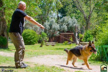 אילוף כלבים: עשה ואל תעשה