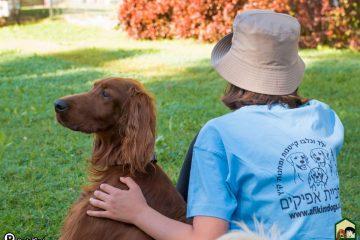 חינוך ואילוף כלבים לצרכים ב'