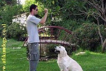 אילוף כלבים