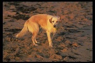 טיפול בחרדה פוסט טראומטית אצל כלבים
