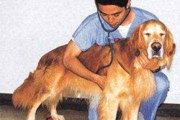 איכות חייו של הכלב הקשיש