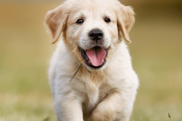 גילאים קריטיים באילוף כלבים