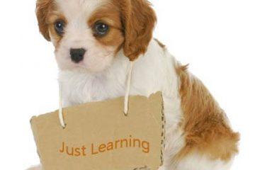 מה בין אילוף לחינוך כלבים