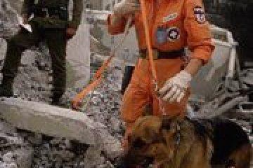 כלבים עובדים – פרק א'